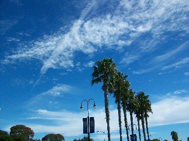 sky &parm tree.jpg